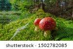 Beautiful Red Mushroom In The...