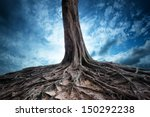 Roots. Scenery beautiful magic and dramatic dark forest full of mystery power and fantasy