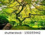 Amazing Green Japanese Maple...