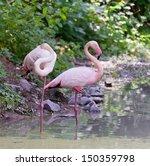 Pair Of Rose Flamingo Stranding ...