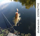 Small photo of Macro photo fishing goby fish. Caught fish goby hanging on a hook with maggot bait. Catch goby fish on river background.