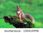 red squirrel in the forest | Shutterstock . vector #150414998