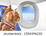 Tan Cat Pet Animal On Seat Of...