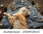 Ginger Cat And Christmas...