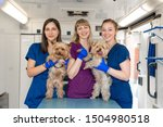 Stock photo young women professional pet doctors posing with yorkshire terriers inside pet ambulance animals 1504980518