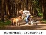 Stock photo walk with many dogs on a leash dog walker with different dog breeds in the beautiful forest 1505004485