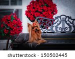 Dog Decorative  Small  Terrier