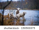 Stock photo golden retriever in the woods the lake the dog on the nature 150503375
