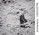 The Woodlands TX USA - 03-26-2019  -  Butterfly on a Sand Bank in B&W