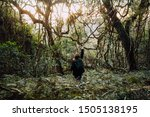 Girl Exploring Ancient Forest ...