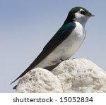 Small photo of Mono Lake Bird