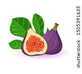 fresh figs  whole and half with ... | Shutterstock .eps vector #1505391635
