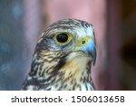 closeup photo of a steppe...   Shutterstock . vector #1506013658