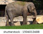 an elephant. the indian...   Shutterstock . vector #1506013688