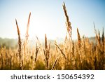 wheat field | Shutterstock . vector #150654392