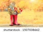 Autumn Season. Garden Flowers...