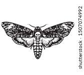 Death's Head Hawk Moth. Black...