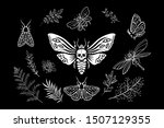 Set Of Elements. Moths In The...