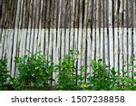 Plant Grow In Front Of Log Of...
