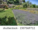 Small photo of Hedges of officinal plants in the vegetable garden of the Capuchins, Cagliari, Sardinia, Italy