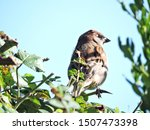 A Sparrow Perching On Branch O...