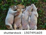 Stock photo four sleeping puppy cute puppy 1507491605