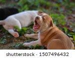 Stock photo brown puppy gape cute puppy sleeping puppy 1507496432