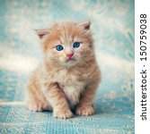 Stock photo a cute little red kitten on a blue background 150759038