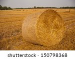 Agricultural Field After The...