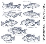 sketch icons of seafood or... | Shutterstock .eps vector #1507986452