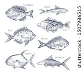 seafood sketch or set of... | Shutterstock .eps vector #1507986515