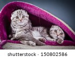 Stock photo cute kittens 150802586