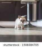 Stock photo kitten in the kitchen little cat at home 1508384705