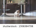Stock photo kitten in the kitchen little cat at home 1508384708
