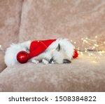 Stock photo kitten sleep in christmas hat little cat sleep on sofa near christmas light 1508384822