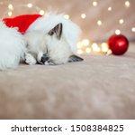 Stock photo kitten sleep in christmas hat little cat sleep on sofa near christmas light 1508384825