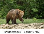 wet brown bear after taking a... | Shutterstock . vector #150849782