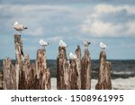 Seagulls Sitting On Wooden Wav...