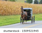 An Amish Carriage Driver In...