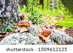 Mushrooms In Autumn Forest...