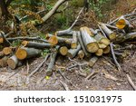 cut trees in the forest | Shutterstock . vector #151031975