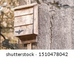 A Bat Box Hangs From A Tree In...