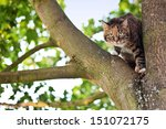 Stock photo cat on a tree 151072175