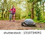 Stock photo galapagos giant tortoise and woman tourist cycling on bike on santa cruz island on galapagos 1510734092