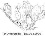magnolia flowers vector image... | Shutterstock .eps vector #1510851908