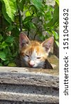 Stock photo cute baby kitten sitting in a tree pot cute kitten brown white hairs color indonesian domestic 1511046632