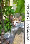 Stock photo cute baby kitten sitting in a tree pot cute kitten brown white hairs color indonesian domestic 1511046662