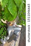 Stock photo cute baby kitten sitting in a tree pot cute kitten brown white hairs color indonesian domestic 1511046665