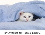 Stock photo little kitten hides under a blue blanket 151113092