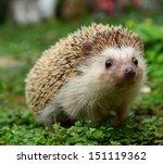 hedgehog | Shutterstock . vector #151119362